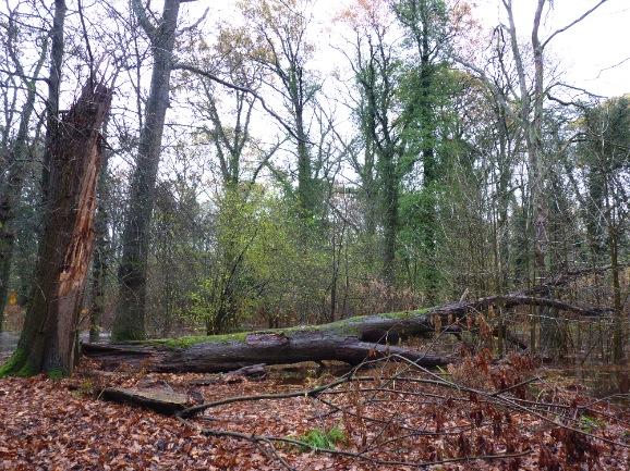 Dood hout in natuurreservaat