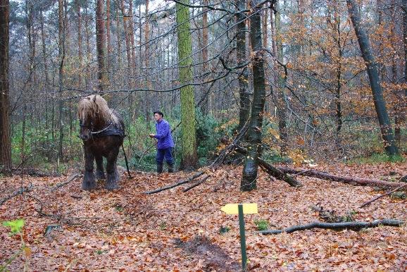 Uitslepen met paard